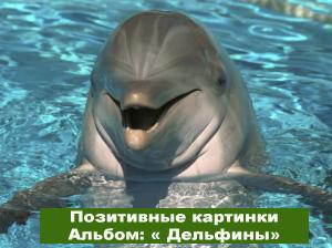 Позитивные картинки Улыбка дельфинов